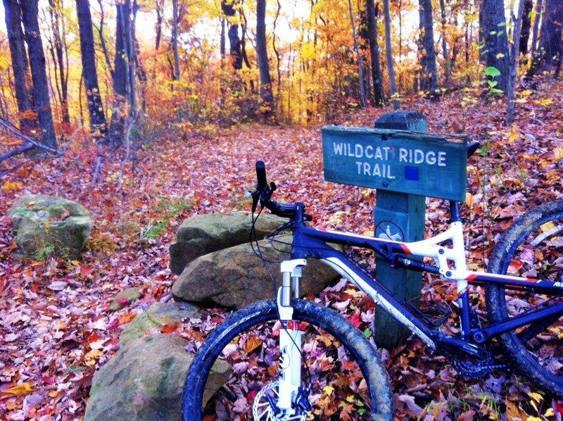 Top of Wildcat Ridge