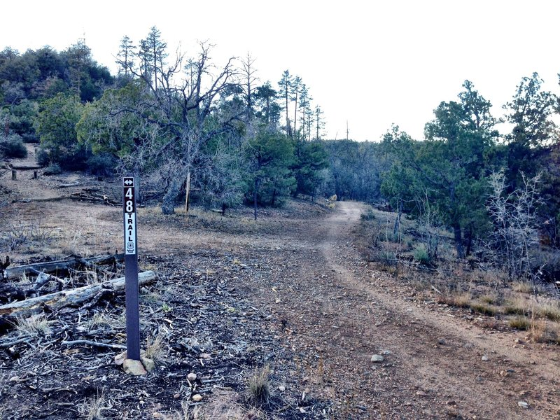 The top of Trail 9415.  Go right on 48 for some downhill fun or straight if you like waterbars.