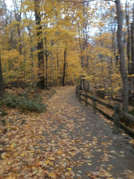 Double wide groomed trail, as you can see it is beautiful in the fall.