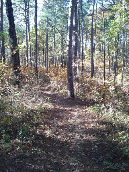 A section of singletrack along the Long Bridge Trail