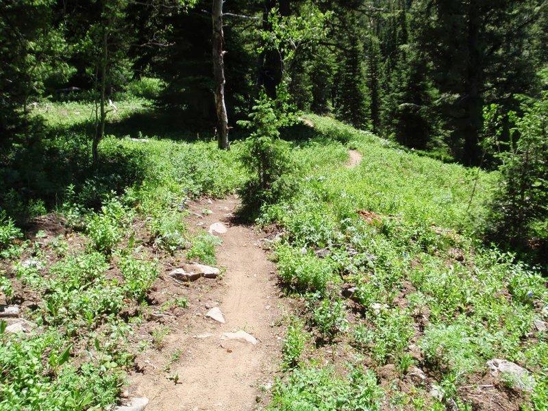 Lightning Ridge trail, photo by Dana Ramos