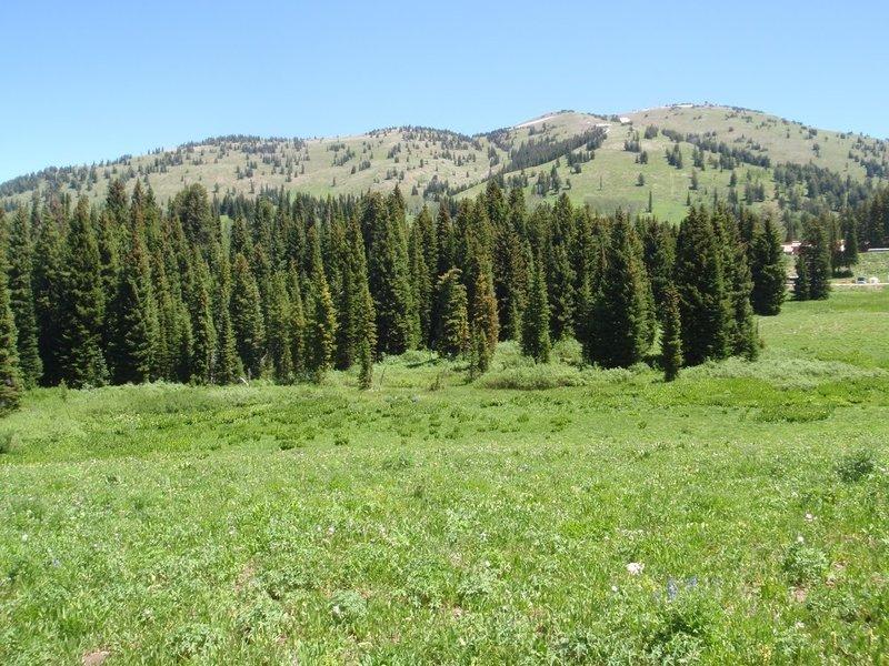 View of Grand Targhee Resort from Greenhorn trail, photo by Dana Ramos