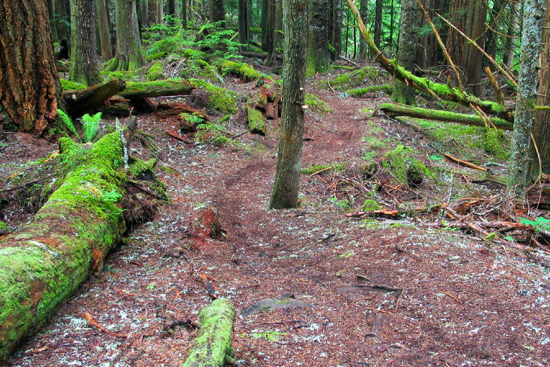 A view of the lush trail ahead on the Skookum Flats Trail.