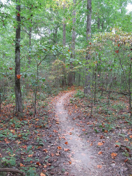 A section of the North Trail a day after the 4th Annual Skool of Hard Nox 50 Mile Endurance Race