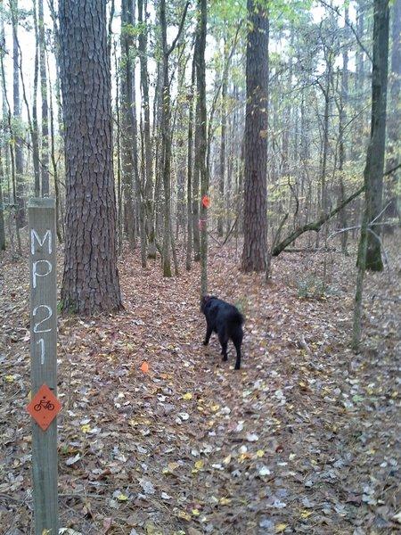 MP 21 along the Splashing Dog Trail