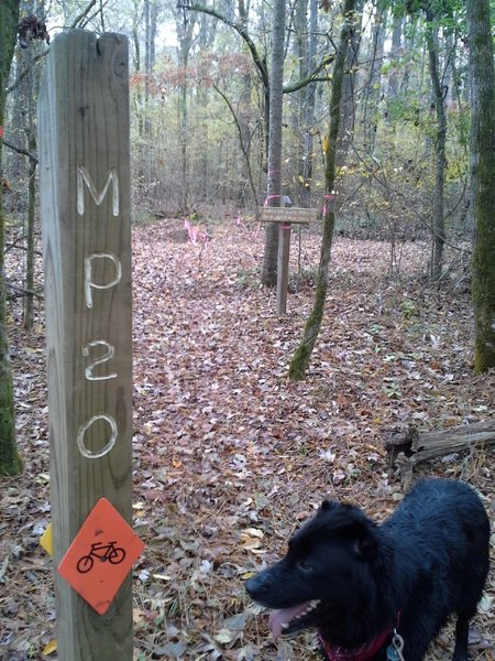MP 20 and Spartacus along the Splashing Dog Trail, near Walker Woods Rd
