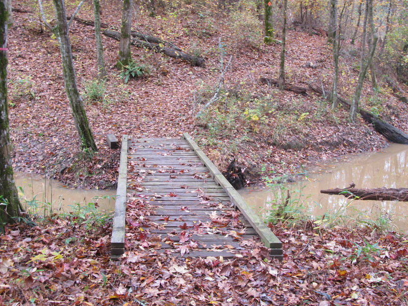 The Splashing Dog Trail crossing the beaver slough between the Noxubee River and the large beaver pond