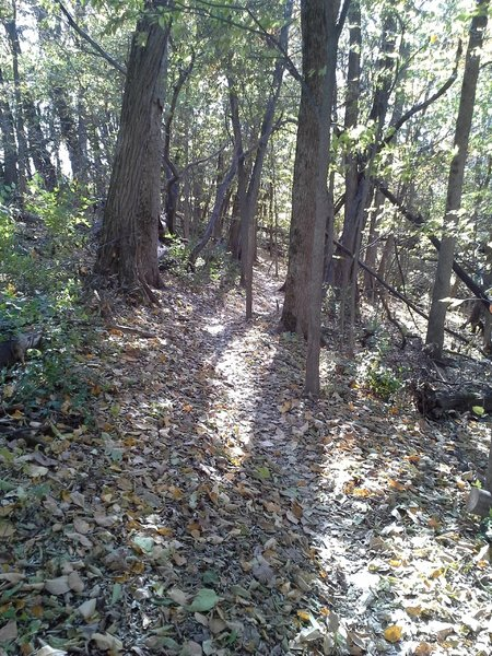 Typical nature of the green trails out here.