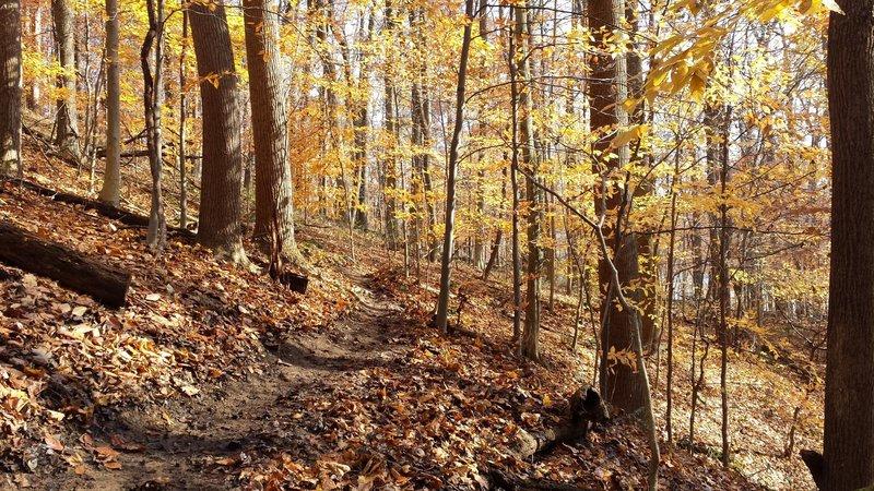 Freshly blown trails on the hillside above Dillon Lake.