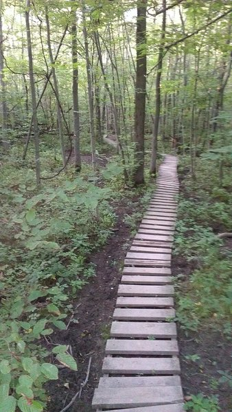 Boardwalk through a wet area on the orange trail.  Built by WNYMBA in 1995 and still going strong!