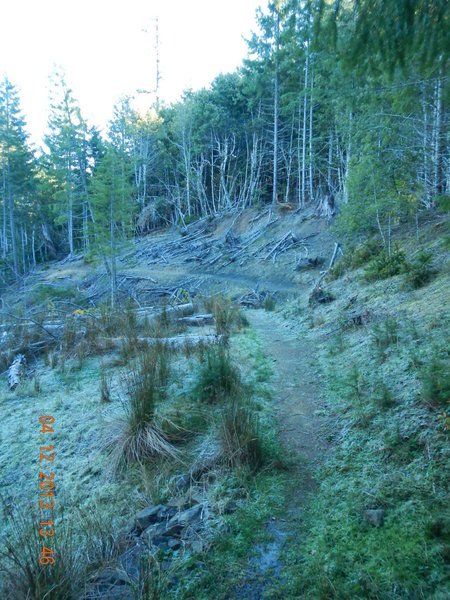 A section of singletrack overlying an old logging road.