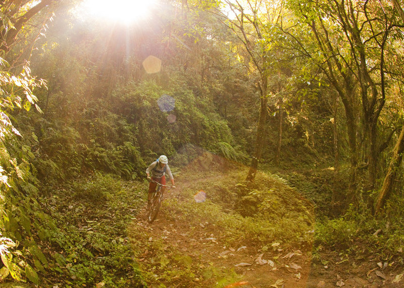 Climbing into lush forest after entering Shivapuri National Park