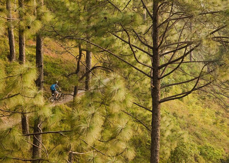 The lower reaches of Kakni to Kapan route traverse through big open pines.