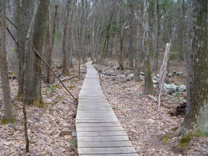 Boardwalk over marshy area.