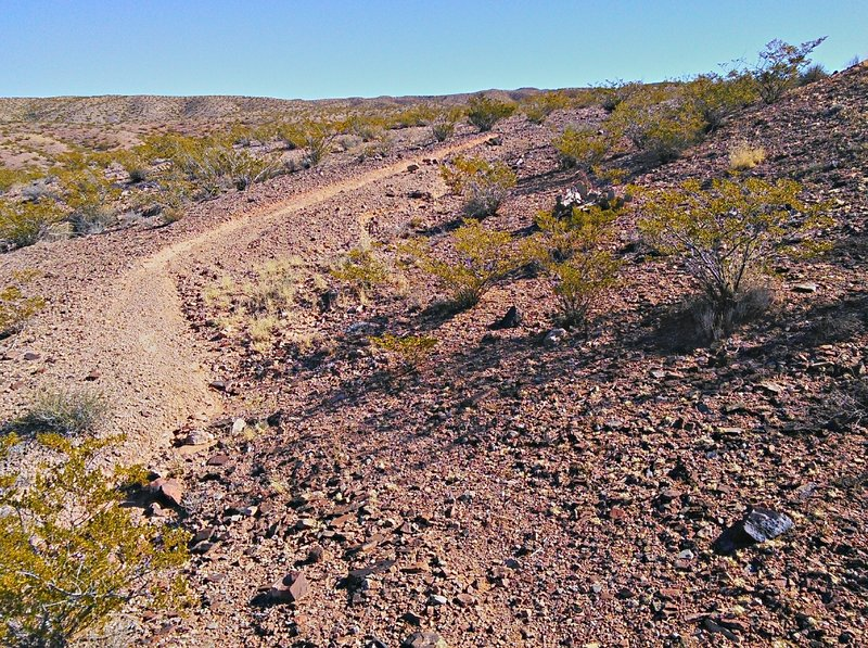 Trail through creosote bush and typical gravel tread