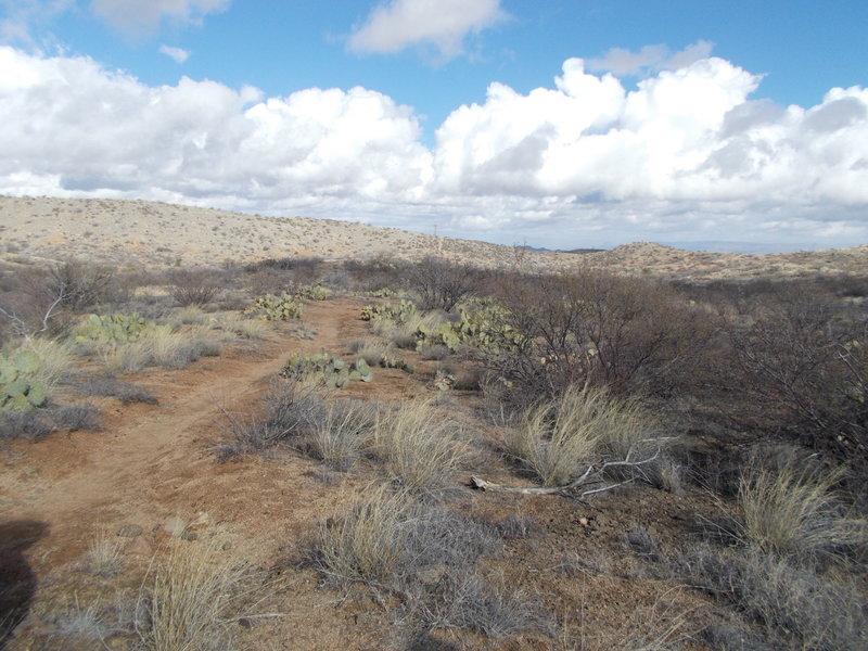 AZ Trail and Wildlife Corridor intersection