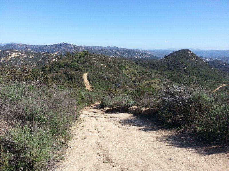 Cougar Ridge Trail view