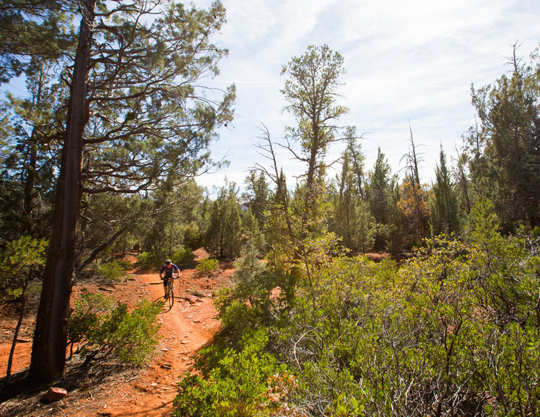 The upper section of Grand Central is mellow - a good way to pedal up to access Adobe Jack or Javelina.