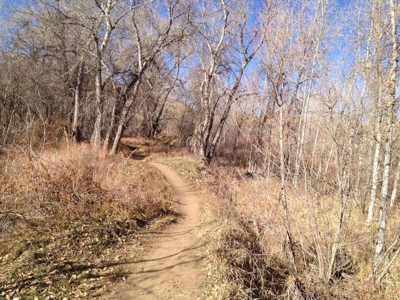 Cottonwood Trail along Bear Creek.
