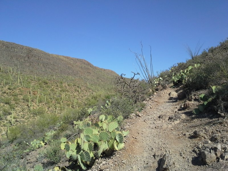 Uphill Section of Trail, Climbing to Yetman Intersection