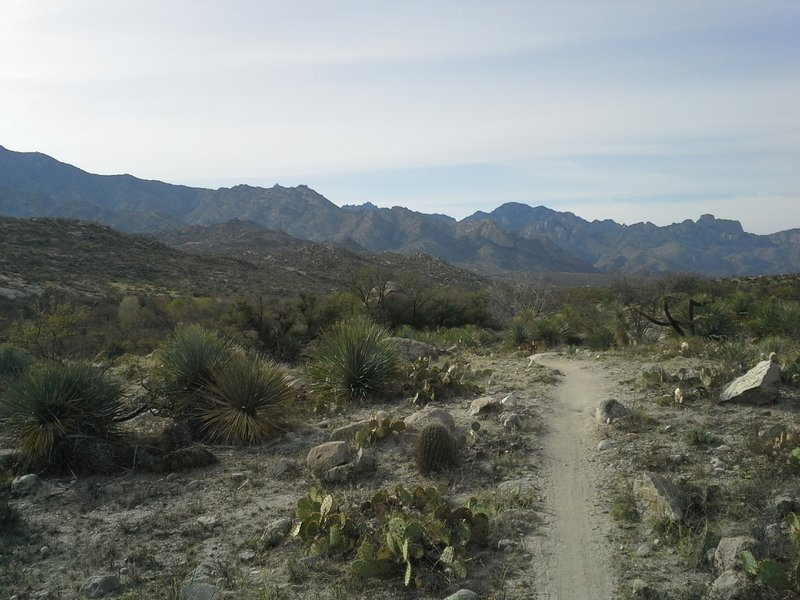 Looking South at the Catalina Mtns