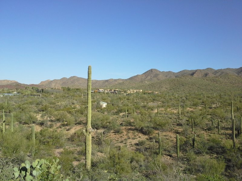 North View of Desert Museum and Juan Santa Cruz picnic area.