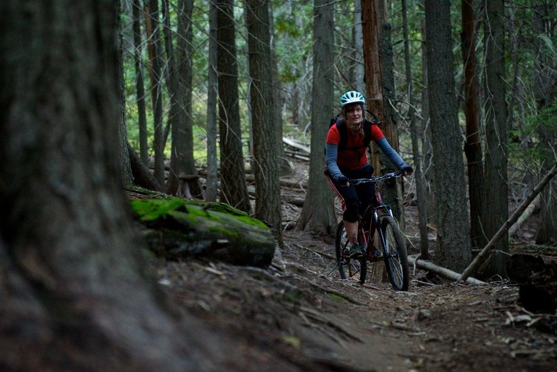 Rounding a bend in the deep forest.