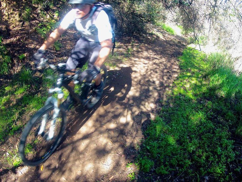 Powering through a tree tunnel on one of the flatter, shaded sections.