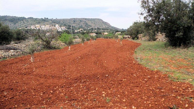 Wonderful red soil and early spring plantings - heading towards Senija
