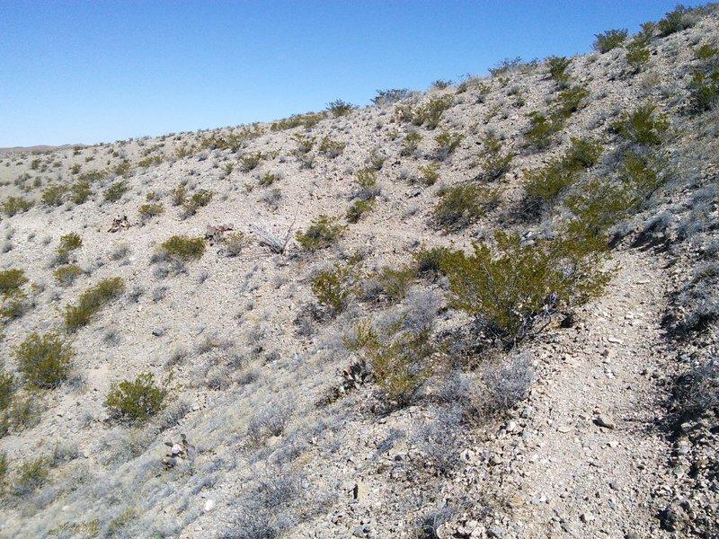 Cross-slope is steeper than most Quebradas trails