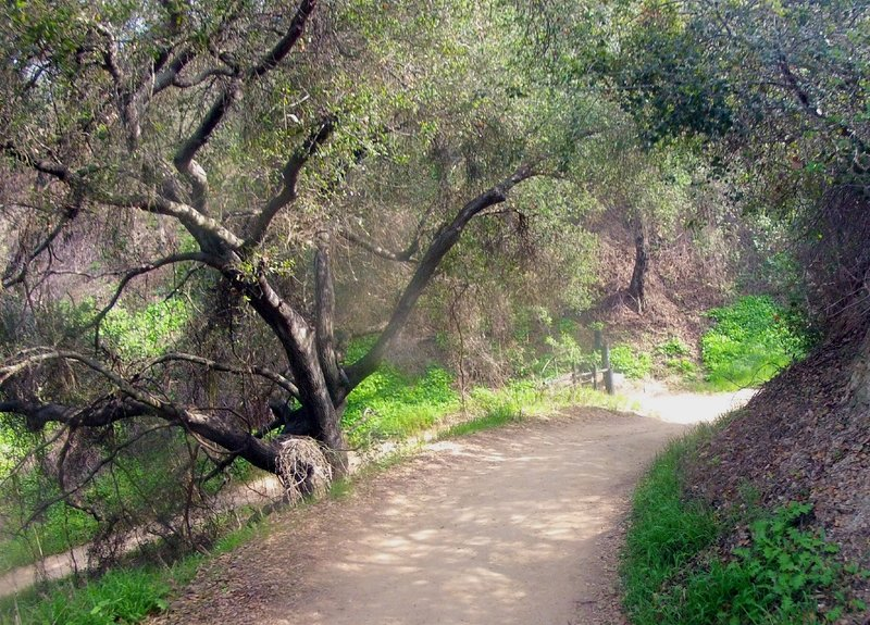Enjoy some shade on this approach to an easy switchback