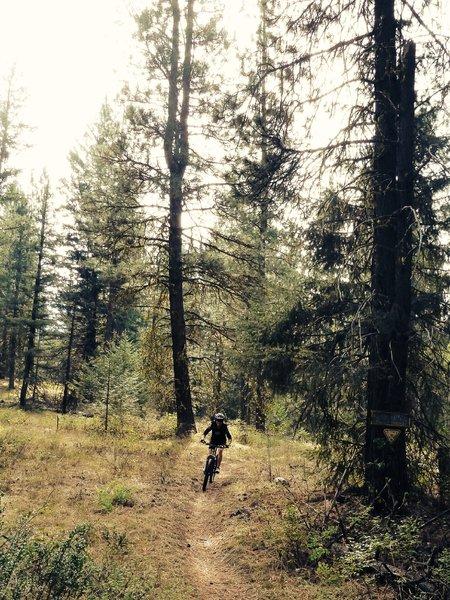 Yellow Jacket Trail