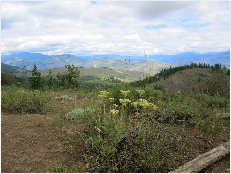 View from Blue Jay Trail