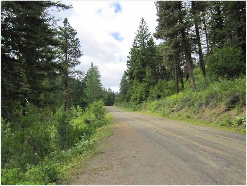 Thompson Road (NF-4410)
