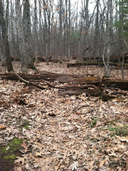 First log pile obstacle on loop 2