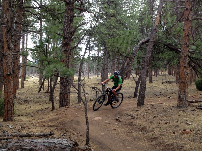 Fun twists and turns in the woods with just a few rocks here and there.