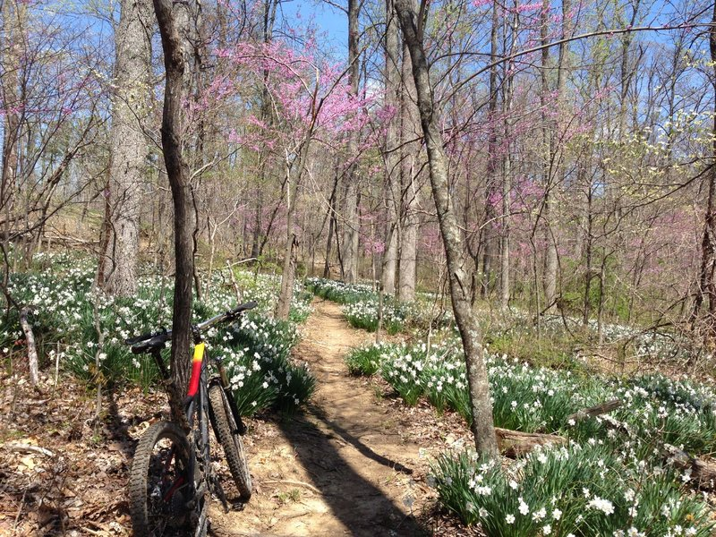 Flowers blooming on the Group Camp Trail