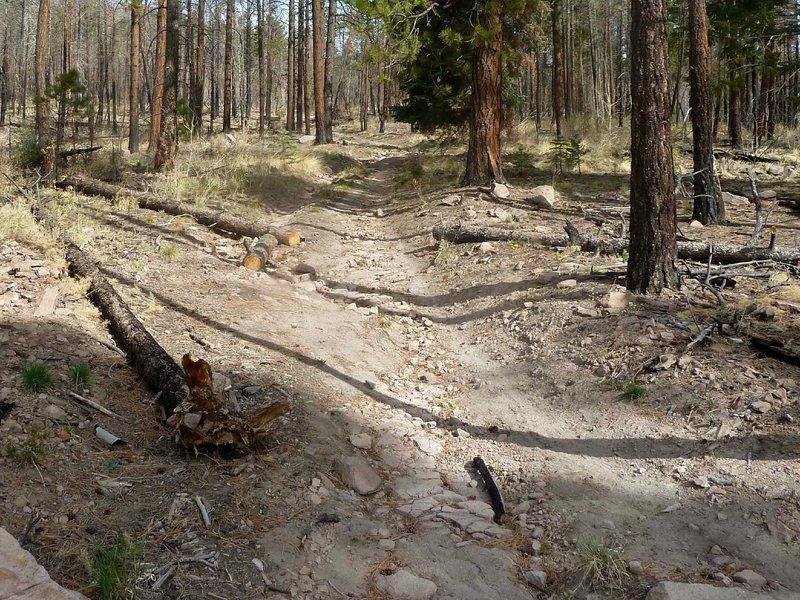 Nail Trail