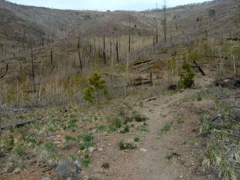 Nail trail above junction with Pajarito Canyon trail