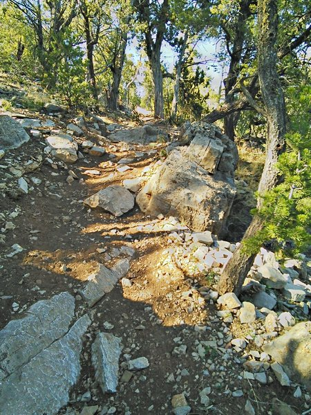 Descent off the west ridge to David Canyon has some steps and tight switchbacks