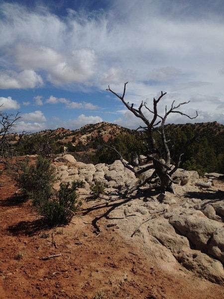 Eliza Ridge Trail, heading east.