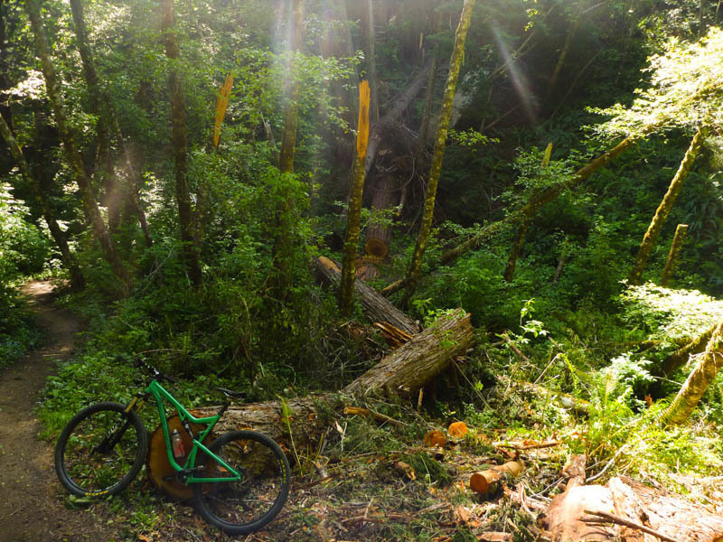 Downed tree on Wittermore Gulch Trail