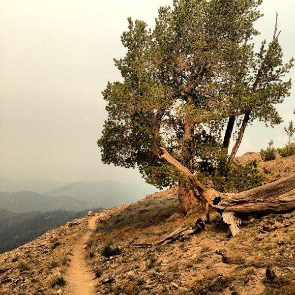 Amazing trail and even more amazing views on Osberg Ridge.