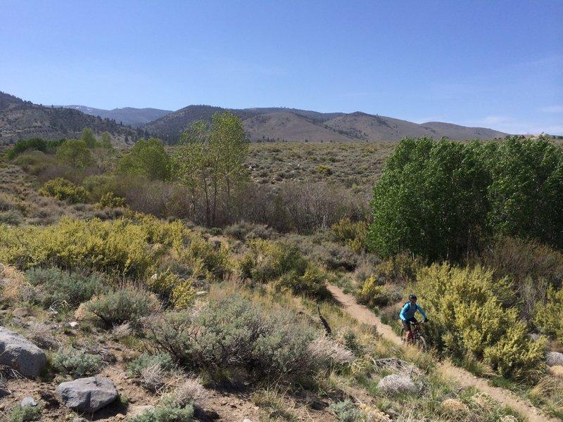 Lower Whites Creek Trail