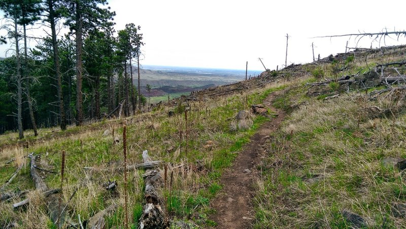 Where the trail finally flattens out before the downhill.
