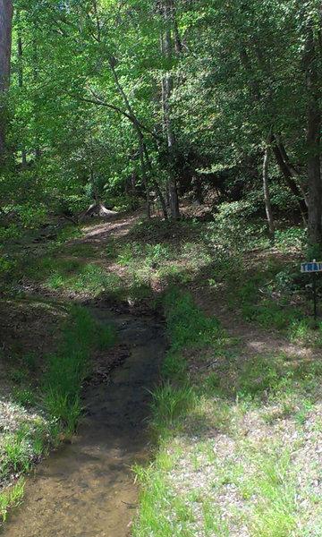 Trail beginning, running parallel to creek.