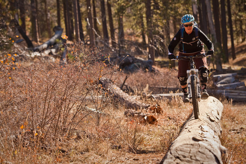 Red Tail Roost features a number of different natural wooden features to test your mettle.