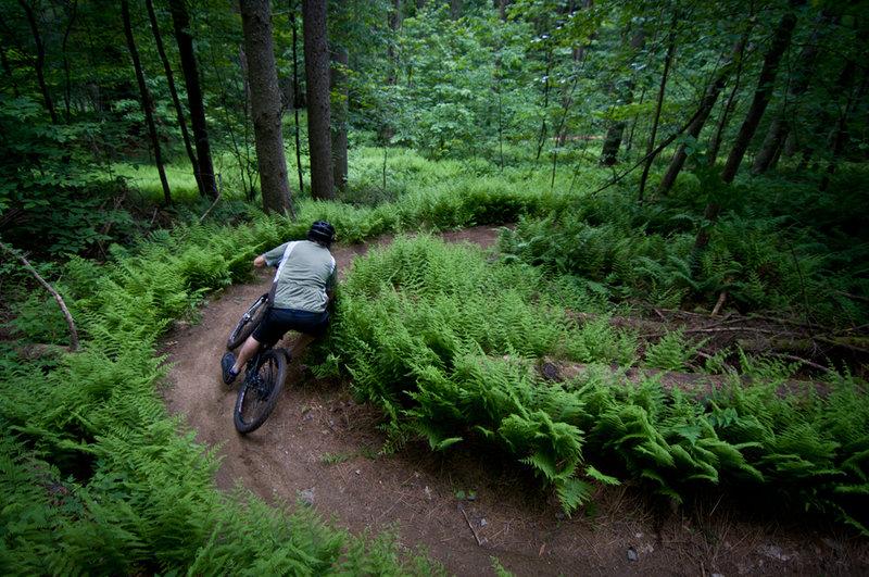 Bear's trail flow