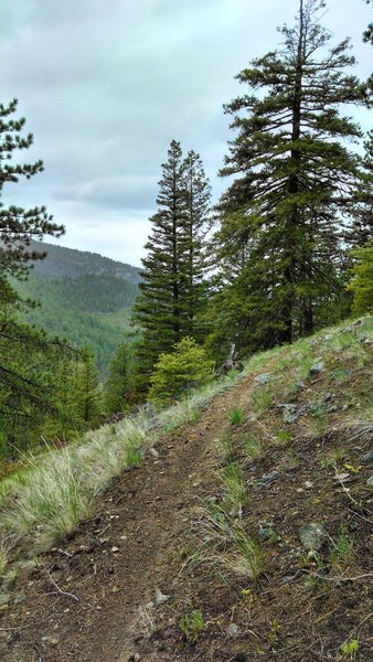 This trail has sections that have great views of the upper Beaver Creek area
