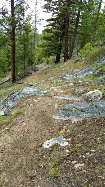 Typical rocky goodness on this trail